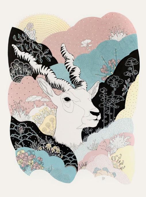 Laura-Riolfi---antilope